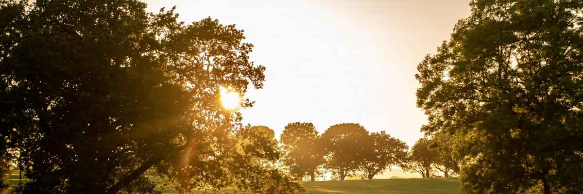 Dawn by Mark Tattersall