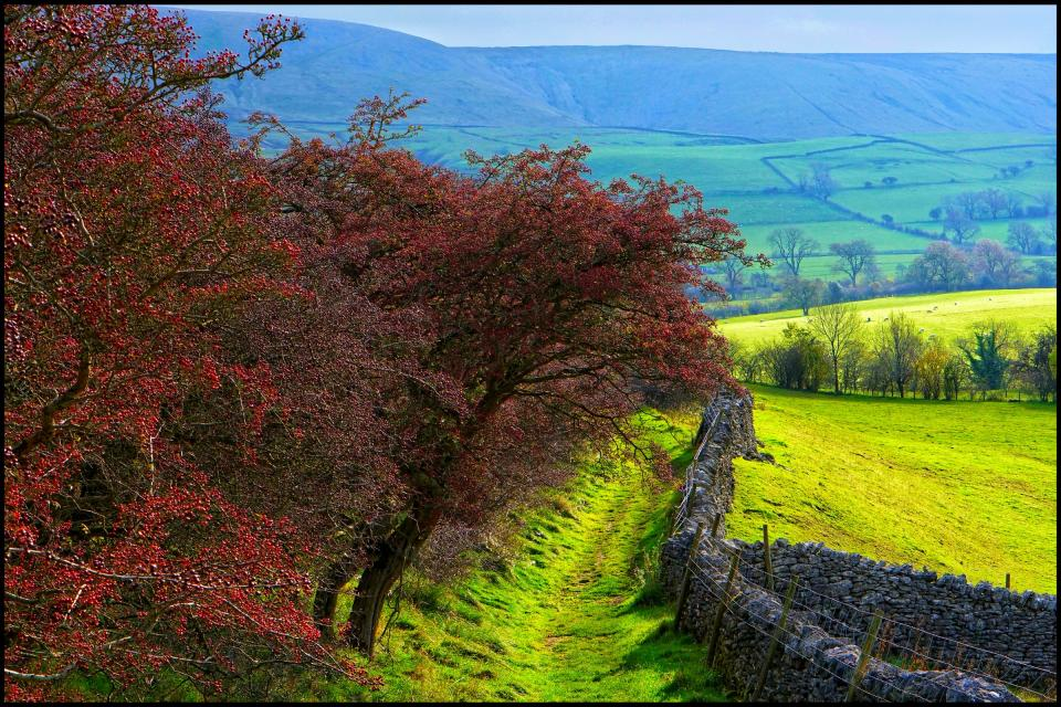 View of Pendle Hill taken from a trail on the Clitheroe side