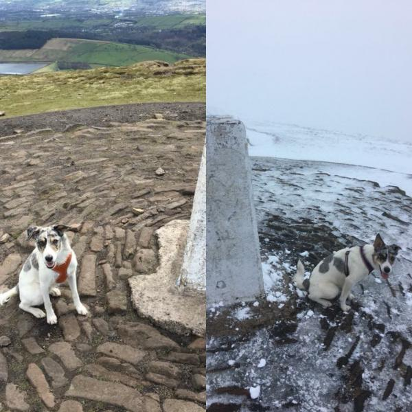 Summer & winter walks with the dog
