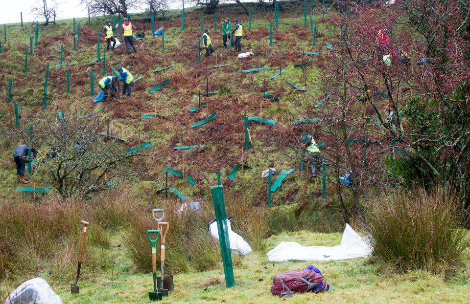 Volunteers tree planting with Ribble River Trust and Pendle Landscape Partnership