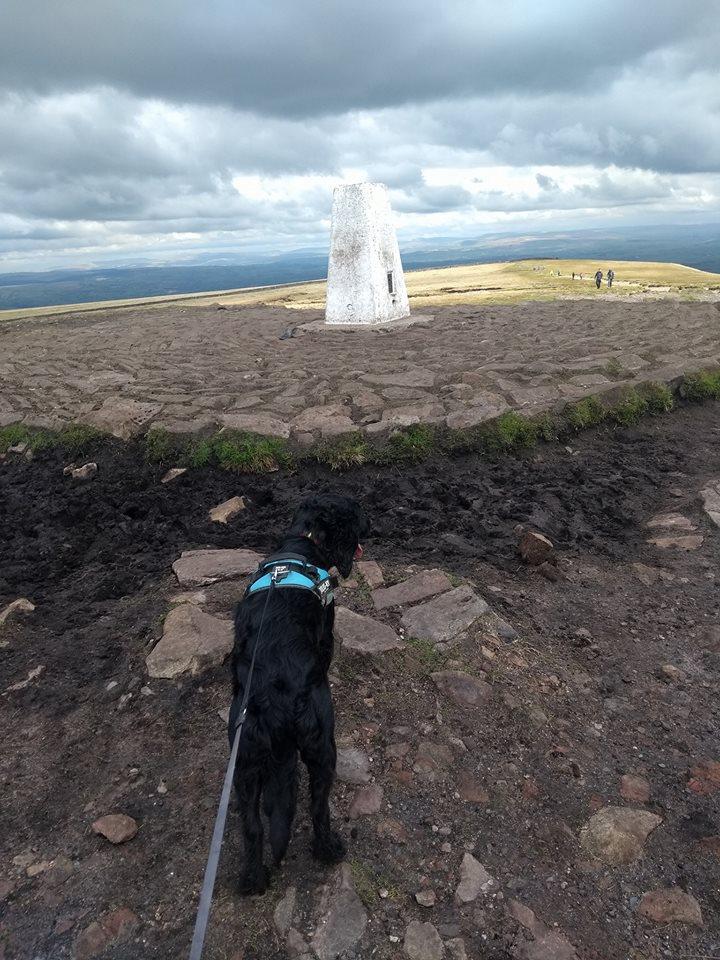 Sammy reaching the summit!