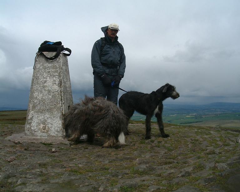 26th May 2007 . My husband , our Bearded Collie and Irsih Wolfhound puppy