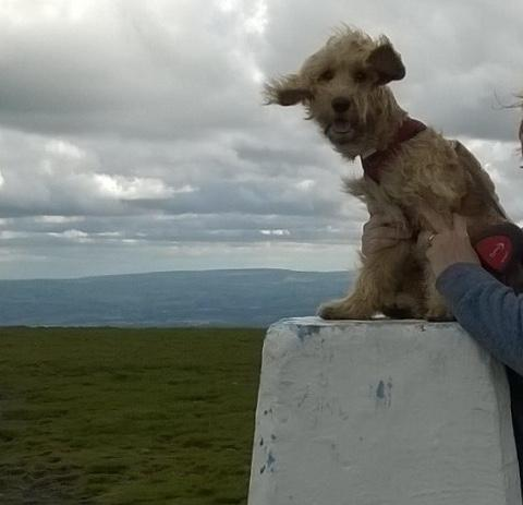Maisie enjoying the view
