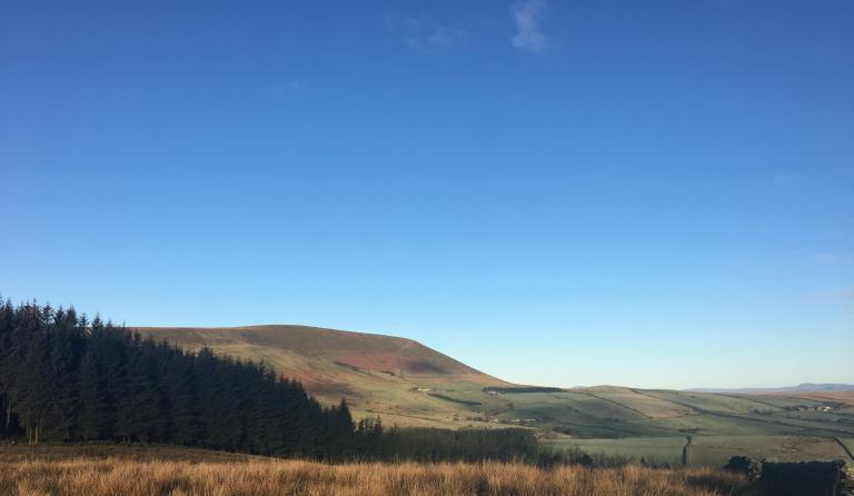 Fell Wood & Pendle Hill