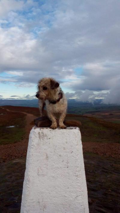 Alice bagged a trig point! © Alan Rhodes