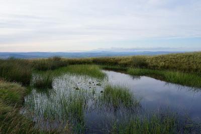 Pool with water lilies on Downham Moor and Ingleborough