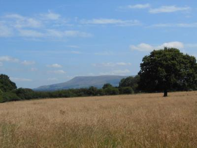 Pendle from near Dinckley