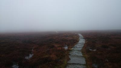 Misty Moor © Ali
